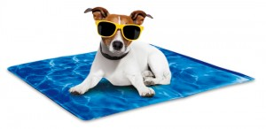 AFP-Chill-Out-Always-Cool-Dog-Mat